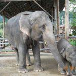 Thailandia 2011 107